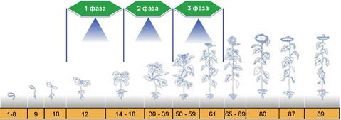 микроэлементы на подсолнечник,удобрение на подсолнух,бор для подсолхнуха
