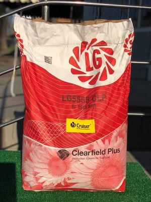 семена лг 5555,лимагрейн лг 5555,lg 5555 clp