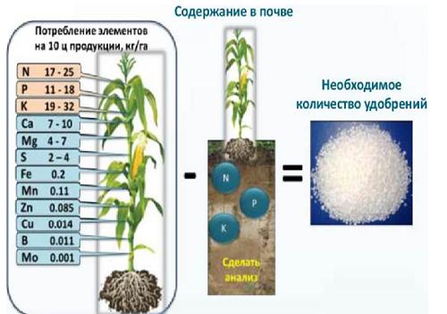 подкормка кукурузы,листовая подкормка кукурузы,удобрения на кукурузу,элементы питания кукурузы,расчет удобрений на кукурузу