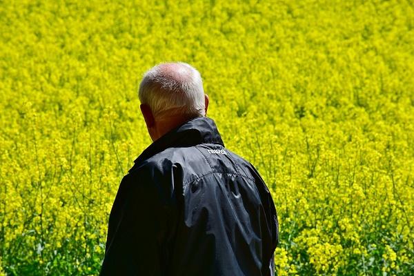 семена рапса,выращивание озимого рапса,возделывание рапса,купить рапс в украине,выращивание рапса в украине,яровой рапс