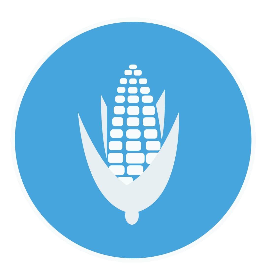 кукуруза,семена кукурузы,гибриды кукурузы
